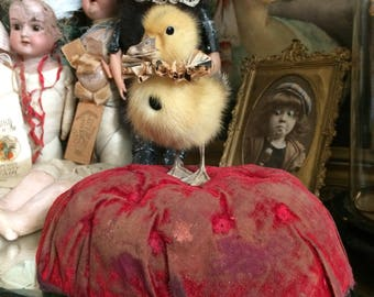 Toot Is Ready To Start The Show From His Antique Worn French Marriage Cushion Taxidermy Duckling
