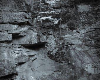 solitude, 8x10 fine art black & white photograph, nature