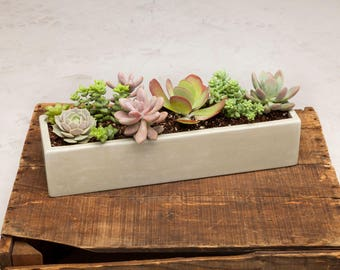 Concrete Planter, Concrete, Planter, Succulent Planter, Outdoor Planter, Indoor Planter, White, Herb Planter, Cement Planter, Buff