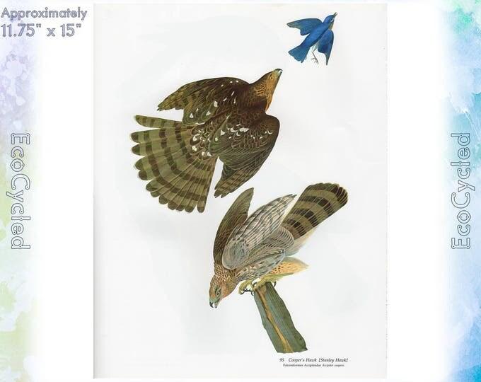 Cooper Hawk Sharp-shinned Hawk Birds of America Vintage Art Print Nature Paper Ephemera John James Audubon Baby Elephant Folio frameable 54