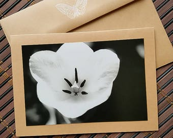 Blank Photo card Black and White Tulip image
