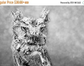 ON SALE Screech Owl, Bird Photography, Owl Decor, Black and White Photography, Bird Wall Art, Nature Print, Raptor, Bird of Prey, Owl Eyes