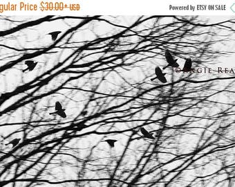 ON SALE Flock of Blackbirds Wall Art, Bird Home Decor, Surreal Black and White Blackbird Print, Flying Blackbird Picture