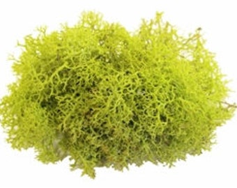 Reindeer Moss, Chartreuse Green , 2oz  -OR-  8oz  / Free Shipping