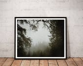redwood photography art p...
