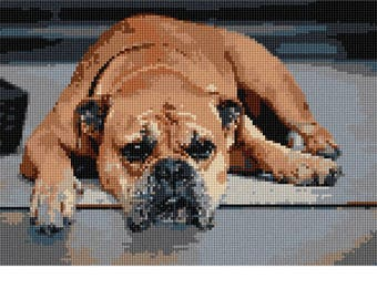 Needlepoint Kit or Canvas: Continental Bulldog