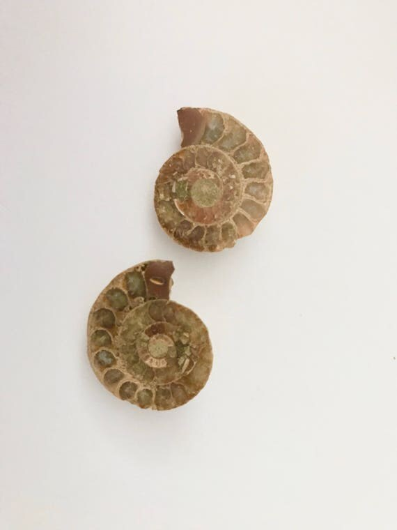 Ammonite Fossil, Ammonite, Ammonite Pair, Nautilus Shell, Mineral Specimen, Healing Crystal, Healing Stone, Jewelry, Craft, Supplies