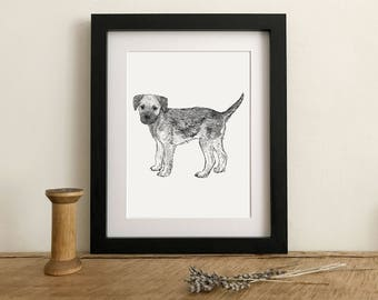 Border Terrier Giclee Print from a hand drawn illustration - Border terrier drawing - Mounted Border Terrier Print