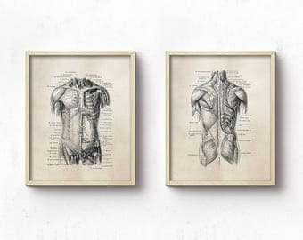 Anatomy PRINTABLE Art Prints - Human Anatomy - Science - Torso - Set Of Two - Light Brown - Housewarming Gift - Medical Student Gift