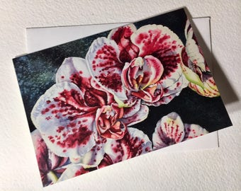Pink and White Orchids Note Card Set