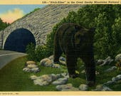Great Smoky Mountains National Park Black Bear 'Hitch Hiker' Vintage Postcard (unused)