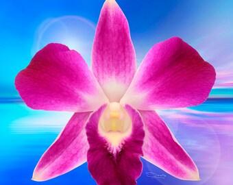 Dendrobium Burst Orchid Metal Print
