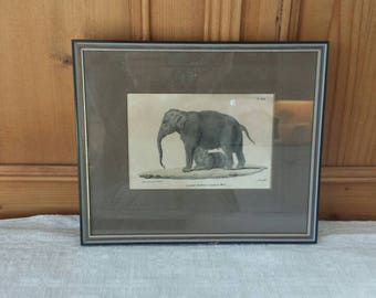 Elephant with young, antique litho