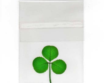 Pressed and Preserved Shamrock in Cello Sleeve Item CL-3L