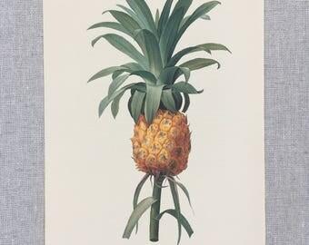 Pineapple Print  Pineapple Decor Pineapple Art  Pineapple Poster Pineapple Picture Pineapple Gift
