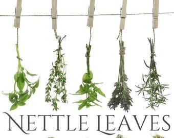 Stinging Nettle, Urtica dioica,  Nettle Leaves, Dried Herbs, Organic Nettle Tea, Organic Nettle Leaf, Beesbotanics Nettle Herb, Dried Nettle