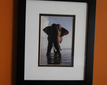 ASIAN ELEPHANT - Rajan bathing - Framed under glass with hook and stand.