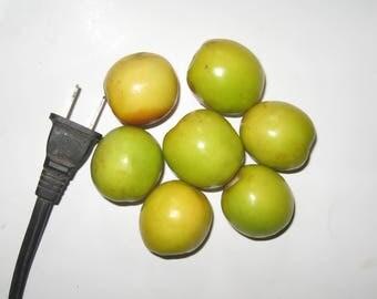 "Ziziphus Mauritiana / Indian Jujube - ""Round – small seed, 25-45 gram fruits"" - 7 seeds"
