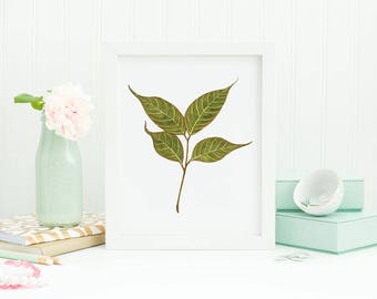 Mahogany leaves illustration, four leaves, watercolor print, botanical watercolor