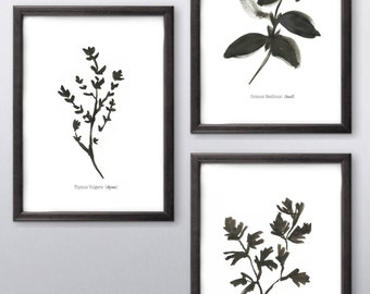 Set of 3 Culinary Herbs Basil Thyme Parsley Minimal Black and White Kitchen Print Wall Art Ink Simple Sketch Illustration Free shipping