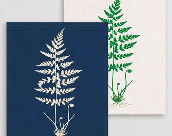 Classic Fern IV- Botanical Decor- Botanical Gifts- Prints for Decor- Botanical Art- Ferns- Nature -Vintage -Vintage Prints -Vintage Art