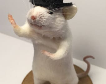 Taxidermy dandy chap mouse in top hat ~ oddities, curio, curiosities