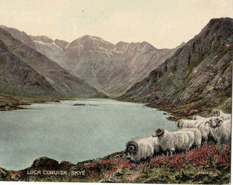 Vintage Postcard,LOCH CORUISK, SKYE,Highland Sheep,Posted Kyle, 1927,Colourtone