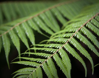 Fern Print New Zealand / Plant Photography/ Green/ Foliage/ Art/ Eleventh Planet Art/ Travel Photography/ Framed Print/ Home Decor/Wall Art