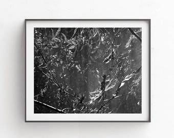 Black and white prints - Interior home decor - 10x8 - Master bedroom decor,  8x10 print - PRINTABLES - dark wall art, Leaf print, b&w prints