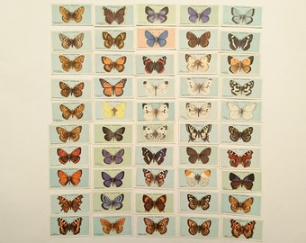 Collectible Wills's Cigarette cards British Butterflies, loose cards, complete set 50 cards, 1927