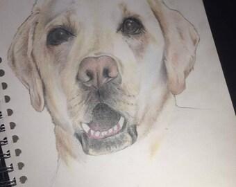 Unique Custom Pet Portrait Drawing for sale on request