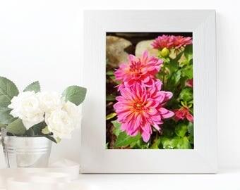 Pink Dahlia Flowers | Flower Photograph | Digital Download
