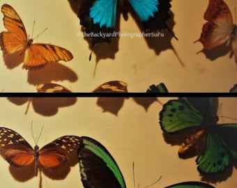 Butterflies of a Difference Color