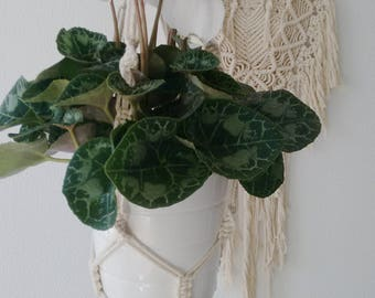 Geraldine Hanging Planter