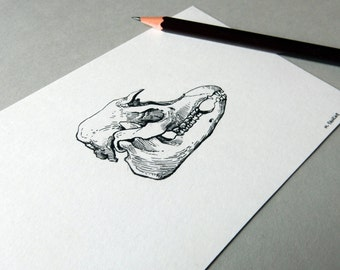 ORIGINAL Ink Drawing - Malayan Tapir Skull