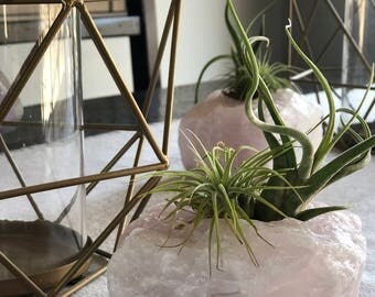 Large Rose Quartz-Air Plants