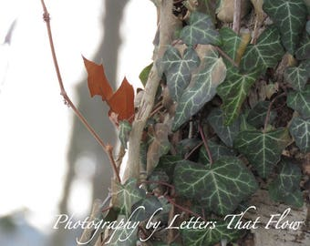 Digital Download   Nature Photography   Life In Winter