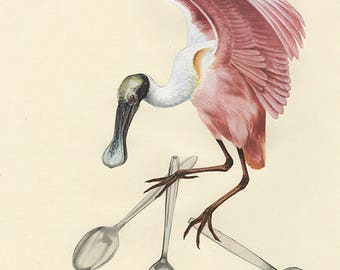 A spoonbill steals the silver.  Collage print by Vivienne Strauss.