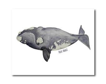 Whale Watercolor Print, Right Whale, Nautical Decor, Coastal Home Decor, Nursery, Print, Giclee
