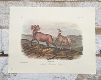 Vintage Mountain Sheep Prints Audubon Prints Natural History Art Prints Victorian Ram Art Rocky Mountain Sheep Rocky Mountain Goat 2 Prints