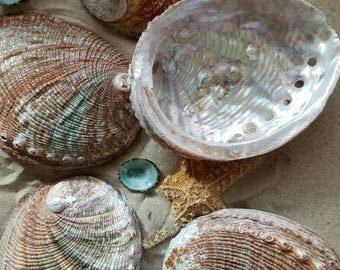 Natural Vintage Rust Sage Colored Abalone Haliotis Seashells Ocean Wave Worn Silver Pearl Iridescent Hints Candle Making Smudge Shell Dish