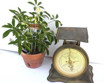 Vintage Rustic Postal Weight Scale Antique Postage Vintage Mail Post Office Scale Antique Home Decor Metal Industrial Decor Office DECOR