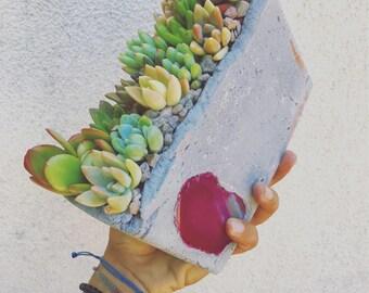 Window sill succulent concrete arrangement