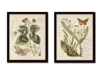 Vintage Butterfly and Botanical Collage Print Set No. 2, Giclee, Antique Botanical Prints, Wall Art, Prints, Vintage Butterfly Prints, Art