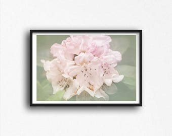 Dreamy Pink Azaleas Flowers Photography Print Rhododendron Bunch Photograph Girl's Room Feminine Nature Photo Floral Wall Art Decor
