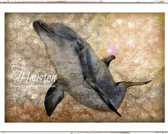 Dolphin Starburst Art Card