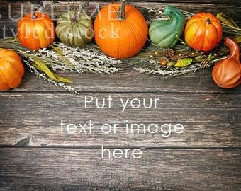 Fall Background /  Fall Styled / Stock Photo / Wood Background / Pumpkins / Gourds / Pumpkins on wood / Social Media Stock / StockStyle-888