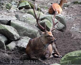 Deer In Field Photograph