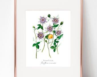 The Crucifixion, Passion Flower, Passiflora incarnata print