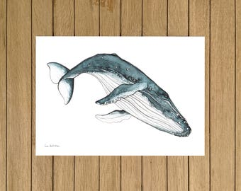 Humpback Whale, Watercolor Illustration, Giclée Print, A3 A4 or A5 size